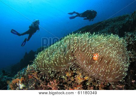 Scuba Diving on coral reef with Anemone and Nemo Fish poster