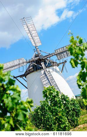 Windmill behind grape vine