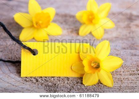 Yellow Empty Tag