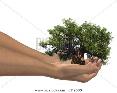 3D hands holding a 3D baobab tree ideal for nature designs