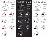 Fresh RABBIT meat parts icon for packaging and info-graphic poster