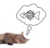 a cute european cat dreaming about fish poster