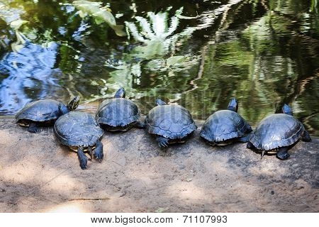 Terrapin line-up