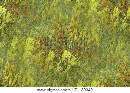 This is a green nature background that has seamless edging in a Claude Monet style poster