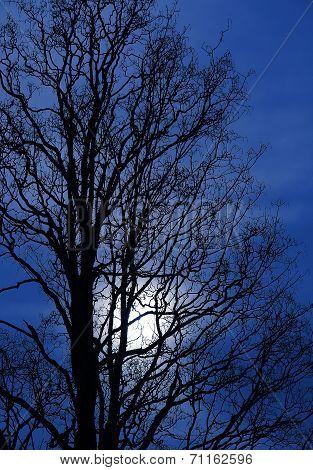 Tree Silhouette In The Dusk, Moonlight Scenery