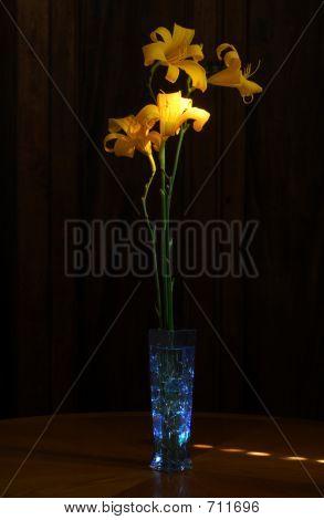 Lightpainted Daylilies