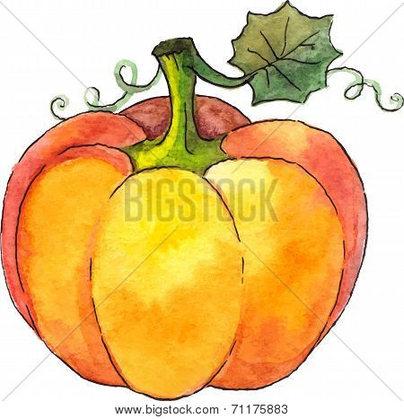 Watercolor painted vector pumpkin