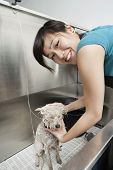 Portrait of young pet groomer washing dog in sink poster