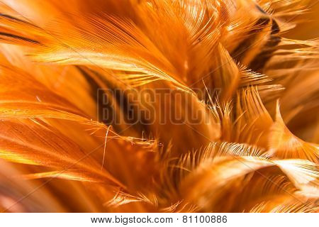 Hen Feather 3