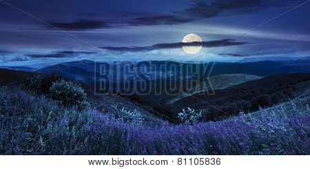Wild Flowers On The Mountain Top At Night