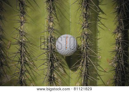 Wild golf shot ball caught in spiky Saguaro cactus tree.