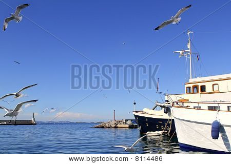 flying seagulls on Formentera port summer balearic islands poster