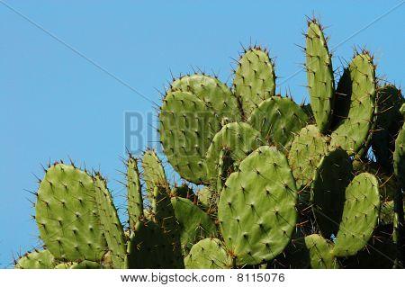 Detail Of Cactus Growing In Puerto Escondido