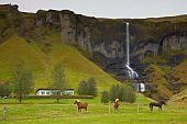 Horses near a little waterfall Horgsland Iceland poster