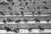 pigeons on stairs poster