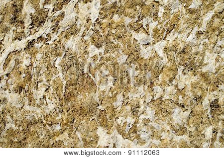 Dry Yellow Algae And Seaweed
