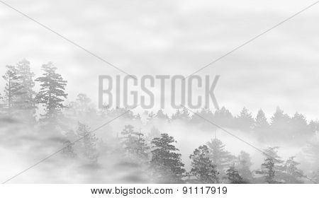 Landscape Of Misty Forest At Sunrise