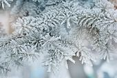 Photo of frozen fir tree background branches of evergreen tree covered rime twigs of spruce covered by hoar in the forest snowy wintertime season beautiful Christmas greeting card xmas holiday poster