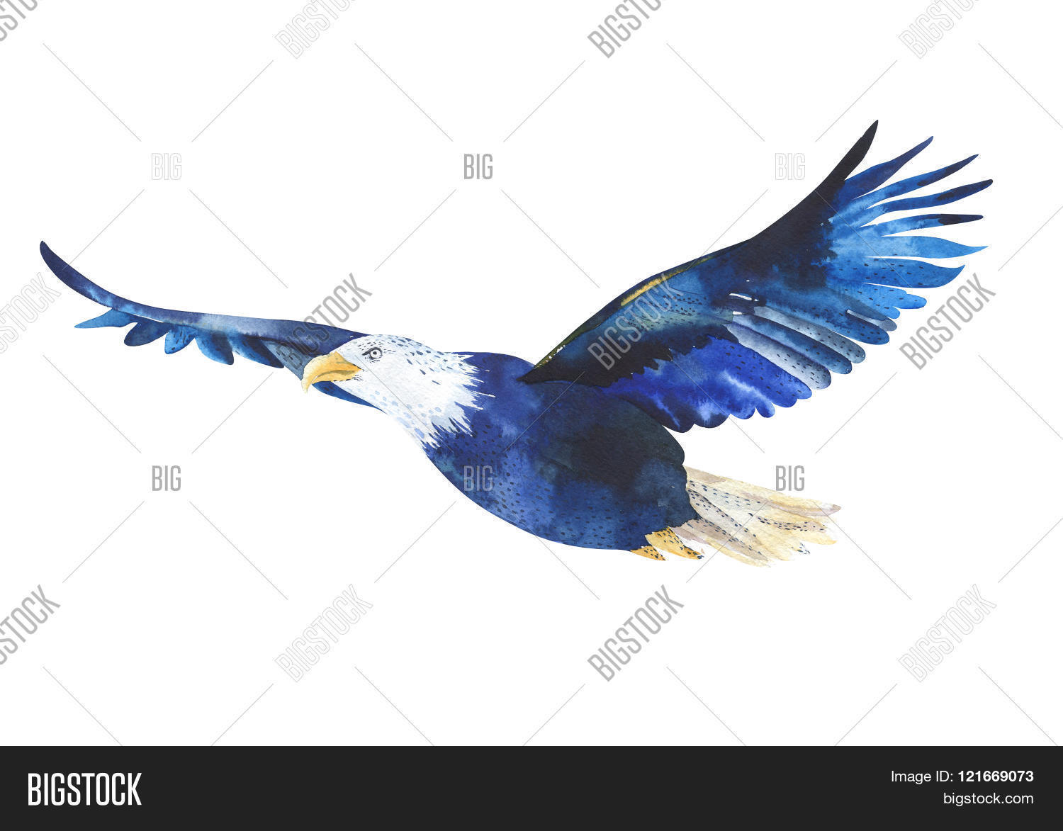 Watercolor Isolated Illustration Of A Bird Eagle In White Background Flying The Sky