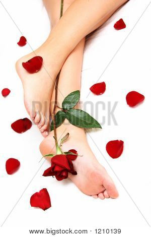 woman's legs with red rose and loose petals poster