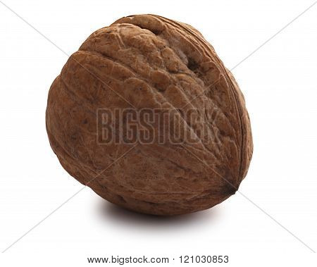 Whole Shelled Walnut