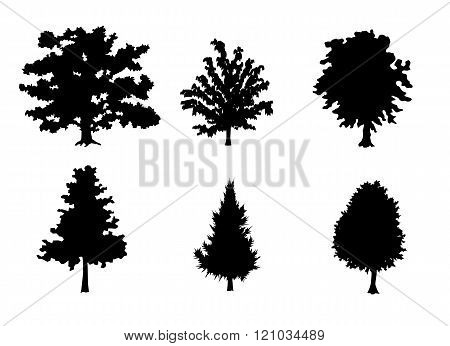 Six Trees Silhouettes