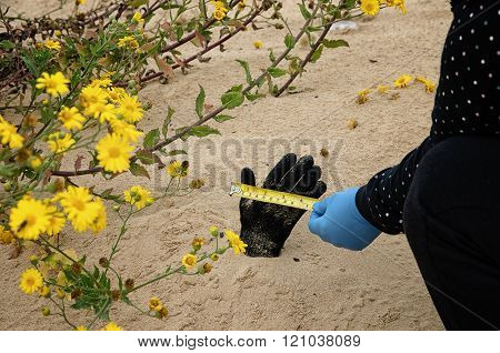 Forensic Expert Is Measuring The Dead Hand Width