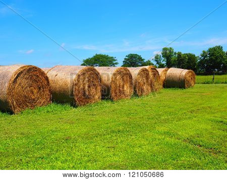 Round Rolled Hay Bale