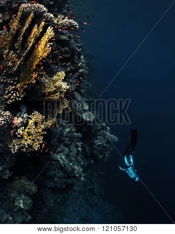 Lady free diver descending along the vivid coral reef wall in the tropical sea