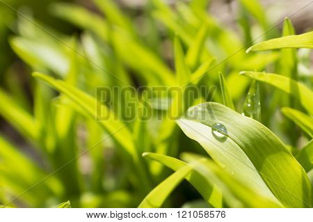 Close-up of water drop on green leaf
