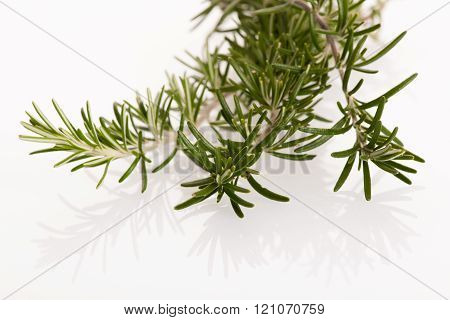 Twig of green fresh rosemary, mediterranian spice, isolated over white background.