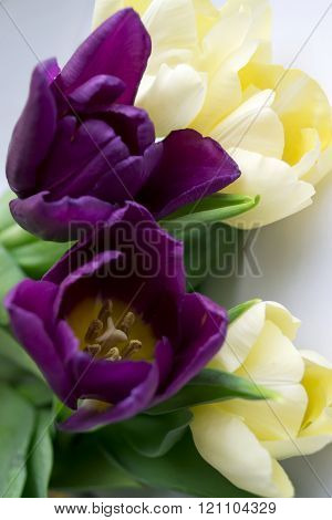Photo Of Violet And Yellow Tulips