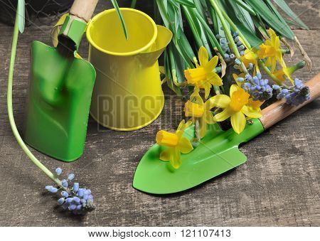 Gardening Tools And Narcissus