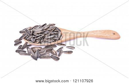 Sunflower Seeds on white Background.