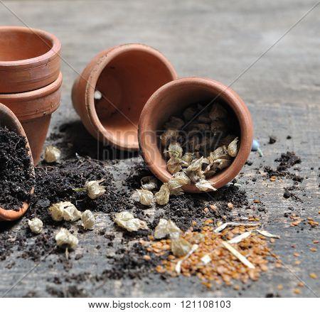 Seeds Spilled From A Jar