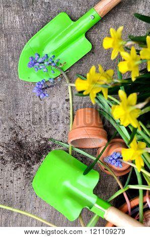 Springtime Gardening Concept