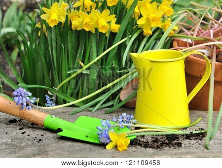 Springtime Flowers And Colorful Tools