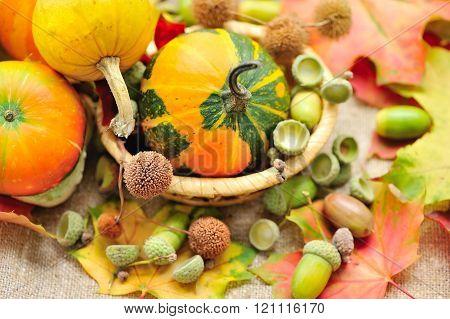 Mini Decorative Pumpkin With Acorns On Autumn Leaves