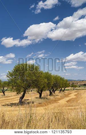 Aragon (spain): Summer Landscape