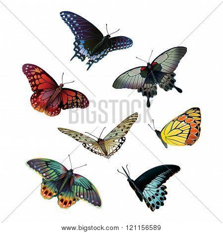 seven bright butterflies