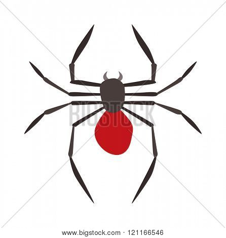 Spider illustration. Black Widow spider. spider over white background. Spider halloween design ison. Spider  black illustration. Spider cartoon design.