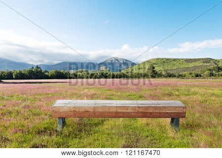 wood long stool in pasture in summer sunny day in New Zealand