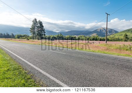 asphalt road near pasture in summer day in New Zealand