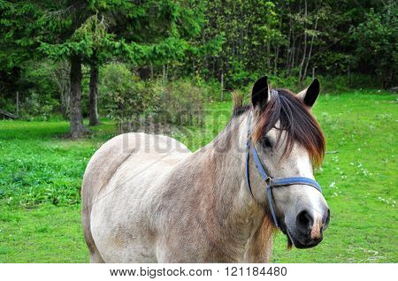 White horse waiting for his master to feed him