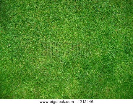 Gras textuur