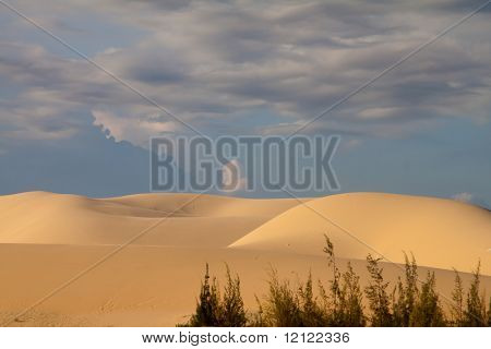 Sand dunes with plants in the front and a stormy sky in the background