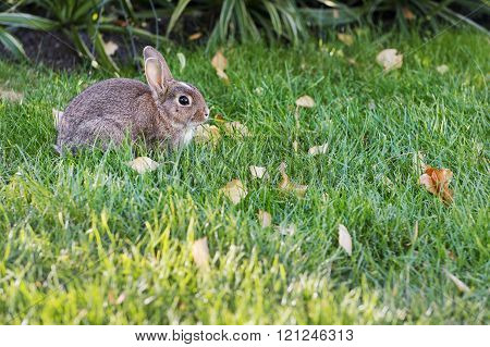 Rabbit on the grass