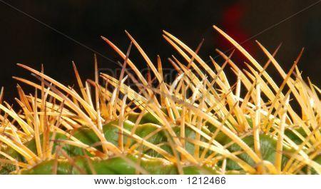 Dangerous Tangle Of Thorns