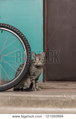 Gray Striped Cat Is Lonely