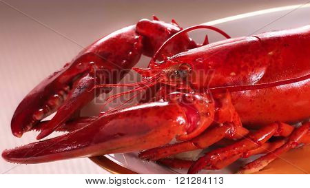 Detail of a lobster served on an oval plate.